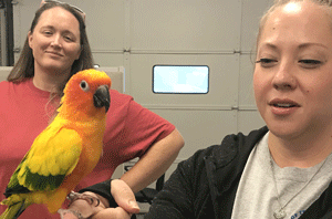 People holding a sun conure parrot